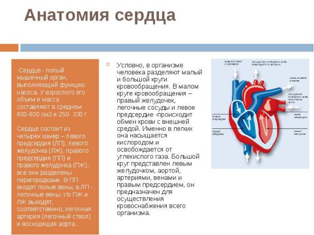 Сердце - полый мышечный орган, выполняющий функцию насоса. У взрослого его объем и масса составляют в среднем 600-800 см3 и 250- 330 г Сердце - полый мышечный орган, выполняющий функцию насоса. У взрослого его объем и масса составляют в …