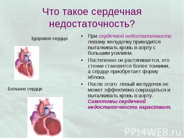 При сердечной недостаточности левому желудочку приходится выталкивать кровь в аорту с большим усилием. При сердечной недостаточности левому желудочку приходится выталкивать кровь в аорту с большим усилием. Постепенно он растягивается, его стенки ста…