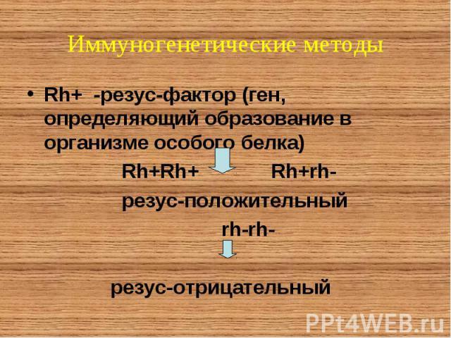 Rh+ -резус-фактор (ген, определяющий образование в организме особого белка) Rh+ -резус-фактор (ген, определяющий образование в организме особого белка) Rh+Rh+ Rh+rh- резус-положительный rh-rh- резус-отрицательный