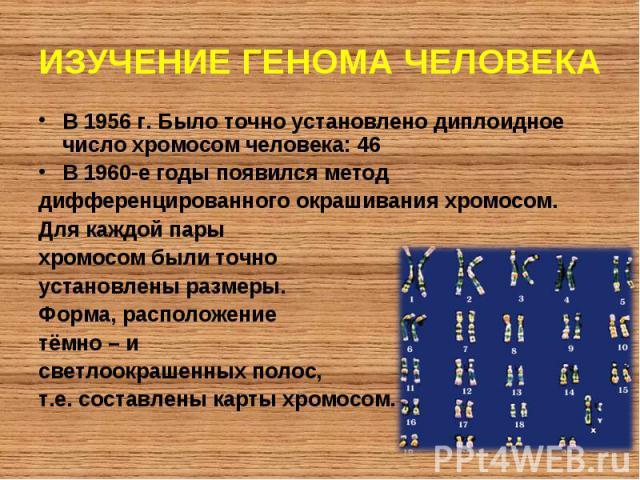 В 1956 г. Было точно установлено диплоидное число хромосом человека: 46 В 1956 г. Было точно установлено диплоидное число хромосом человека: 46 В 1960-е годы появился метод дифференцированного окрашивания хромосом. Для каждой пары хромосом были точн…