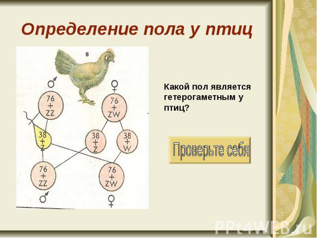 Определение пола у птиц