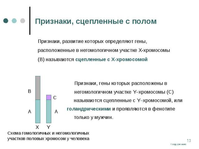 Признаки, гены которых расположены в Признаки, гены которых расположены в негомологичном участке Y–хромосомы (С) называются сцепленные с Y–хромосомой, или голандрическими и проявляются в фенотипе только у мужчин.