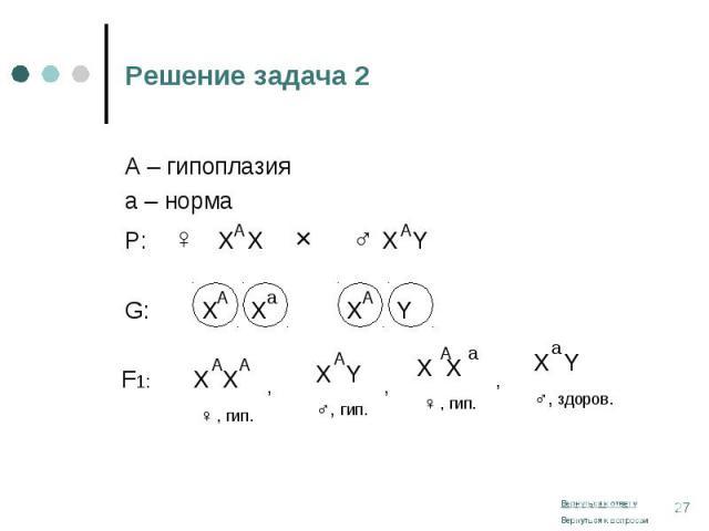 А – гипоплазия А – гипоплазия а – норма Р: ♀ Х Х × ♂ Х Y G: Х Х Х Y