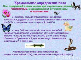 Хромосомное определение пола Хромосомное определение пола
