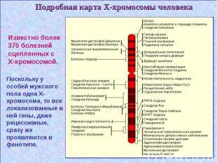 Подробная карта Х-хромосомы человека Подробная карта Х-хромосомы человека
