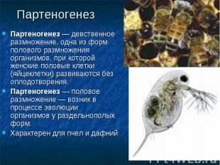 Партеногенез — девственное размножение, одна из форм полового размножения органи