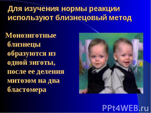 Монозиготные близнецы образуются из одной зиготы, после ее деления митозом на два бластомера