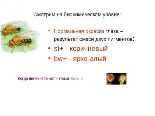 Нормальная окраска глаза – результат смеси двух пигментов: Нормальная окраска гл