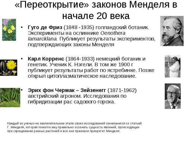 Гуго де Фриз (1848 -1935) голландский ботаник. Эксперименты на ослиннике Oenothera lamarcklana. Публикует результаты экспериментов, подтверждающих законы Менделя Гуго де Фриз (1848 -1935) голландский ботаник. Эксперименты на ослиннике Oenothera lama…