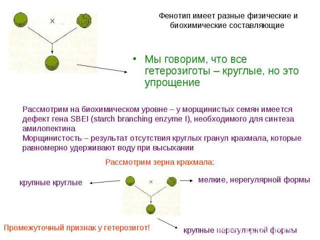 Мы говорим, что все гетерозиготы – круглые, но это упрощение Мы говорим, что все гетерозиготы – круглые, но это упрощение