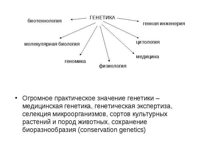 Огромное практическое значение генетики – медицинская генетика, генетическая экспертиза, селекция микроорганизмов, сортов культурных растений и пород животных, сохранение биоразнообразия (conservation genetics)
