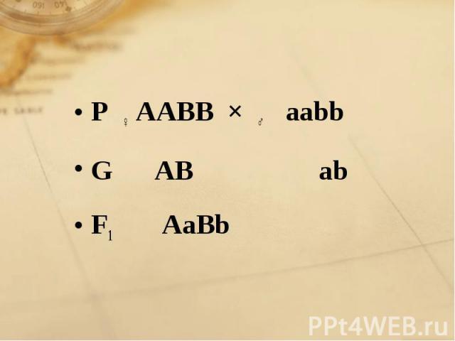 P ♀ AABB × ♂ aabb G AB ab F1 AaBb