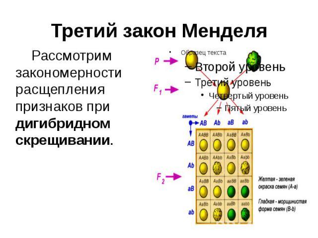 Третий закон Менделя Рассмотрим закономерности расщепления признаков при дигибридном скрещивании.