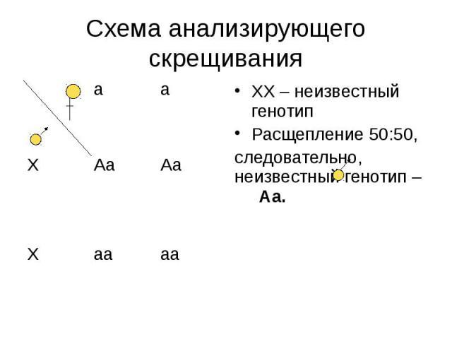 Схема анализирующего скрещивания ХХ – неизвестный генотип Расщепление 50:50, следовательно, неизвестный генотип – Аа.