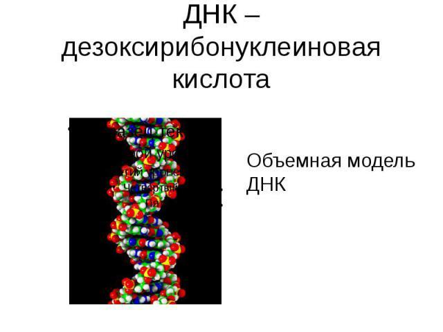 ДНК – дезоксирибонуклеиновая кислота