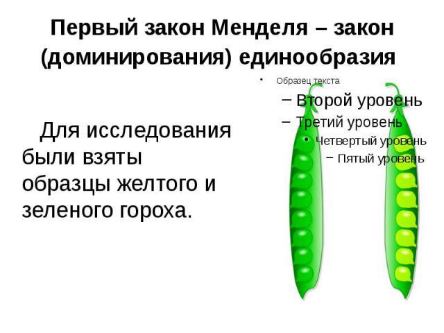 Первый закон Менделя – закон (доминирования) единообразия Для исследования были взяты образцы желтого и зеленого гороха.