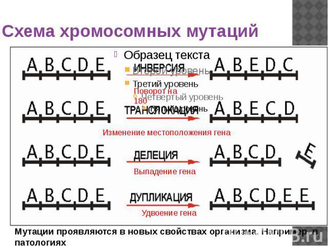 Схема хромосомных мутаций
