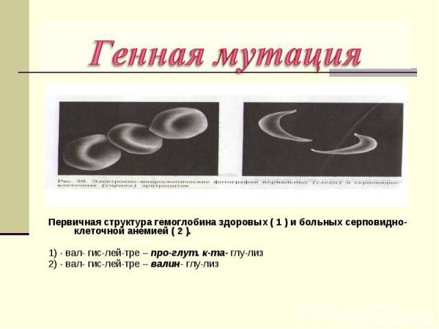Первичная структура гемоглобина здоровых ( 1 ) и больных серповидно- клеточной анемией ( 2 ). 1) - вал- гис-лей-тре – про-глут. к-та- глу-лиз 2) - вал- гис-лей-тре – валин- глу-лиз