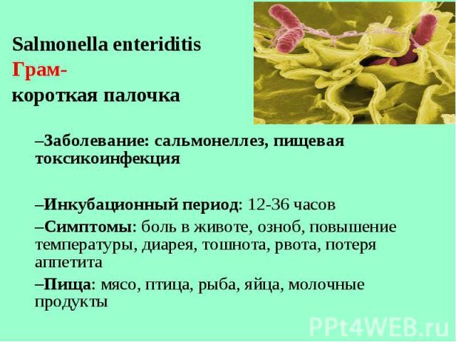 Salmonella enteriditis Salmonella enteriditis Грам- короткая палочка Заболевание: сальмонеллез, пищевая токсикоинфекция Инкубационный период: 12-36 часов Симптомы: боль в животе, озноб, повышение температуры, диарея, тошнота, рвота, потеря аппетита …