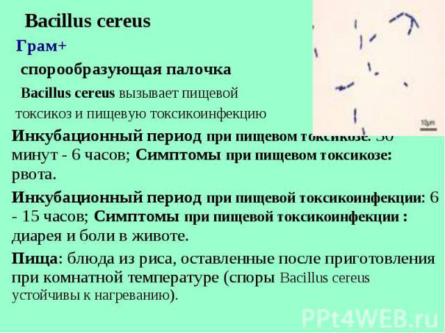 Bacillus cereus Bacillus cereus Грам+ спорообразующая палочка Bacillus cereus вызывает пищевой токсикоз и пищевую токсикоинфекцию Инкубационный период при пищевом токсикозе: 30 минут - 6 часов; Симптомы при пищевом токсикозе: рвота. Инкубационный пе…