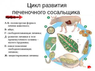 http://files.school-collection.edu.ru/dlrstore/7b16e902-0a01-022a-00fe-255805b98