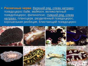Ресничные черви. Верхний ряд, слева направо: псевдоцерос байе, майязон, великоле