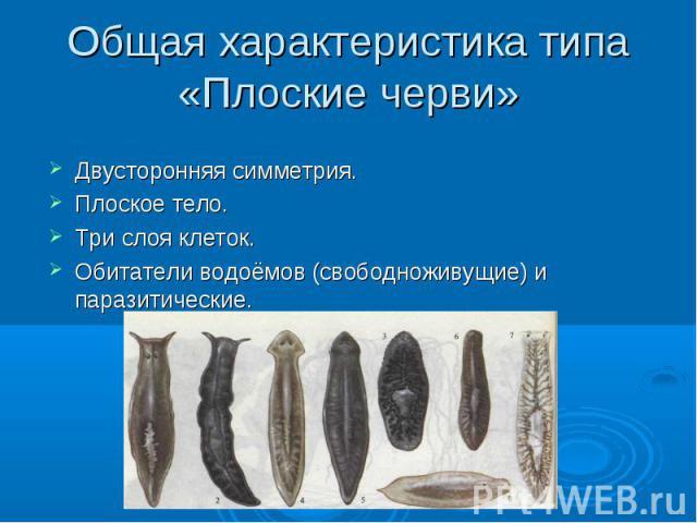 Общая характеристика типа «Плоские черви» Двусторонняя симметрия. Плоское тело. Три слоя клеток. Обитатели водоёмов (свободноживущие) и паразитические.
