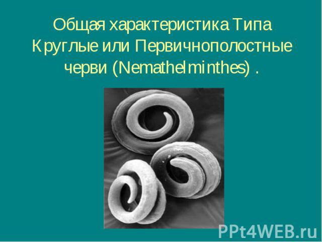 Общая характеристика Типа Круглые или Первичнополостные черви (Nemathelminthes) .