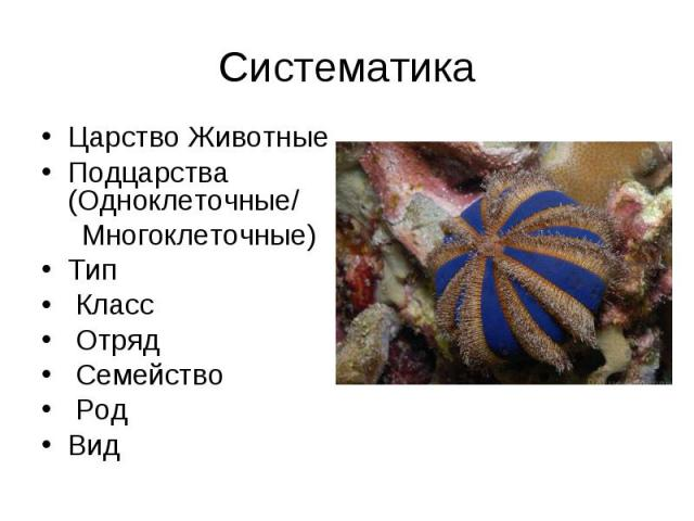 Царство Животные Царство Животные Подцарства (Одноклеточные/ Многоклеточные) Тип Класс Отряд Семейство Род Вид