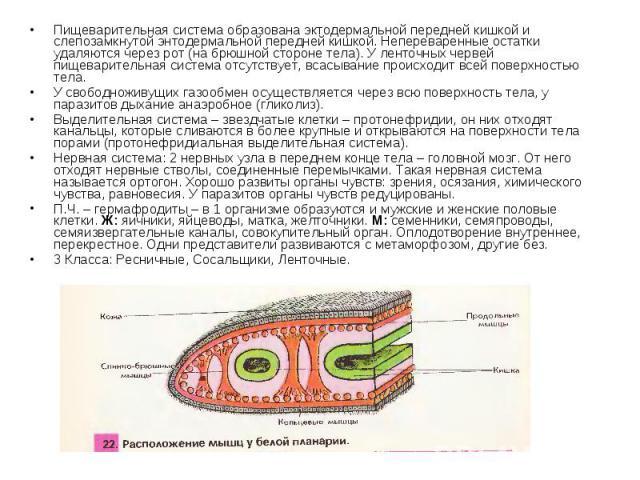 Пищеварительная система образована эктодермальной передней кишкой и слепозамкнутой энтодермальной передней кишкой. Непереваренные остатки удаляются через рот (на брюшной стороне тела). У ленточных червей пищеварительная система отсутствует, всасыван…
