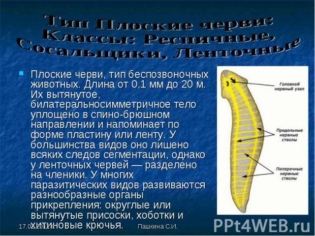 Плоские черви, тип беспозвоночных животных. Длина от 0,1 мм до 20 м. Их вытянутое, билатеральносимметричное тело уплощено в спино-брюшном направлении и напоминает по форме пластину или ленту. У большинства видов оно лишено всяких следов сегментации,…