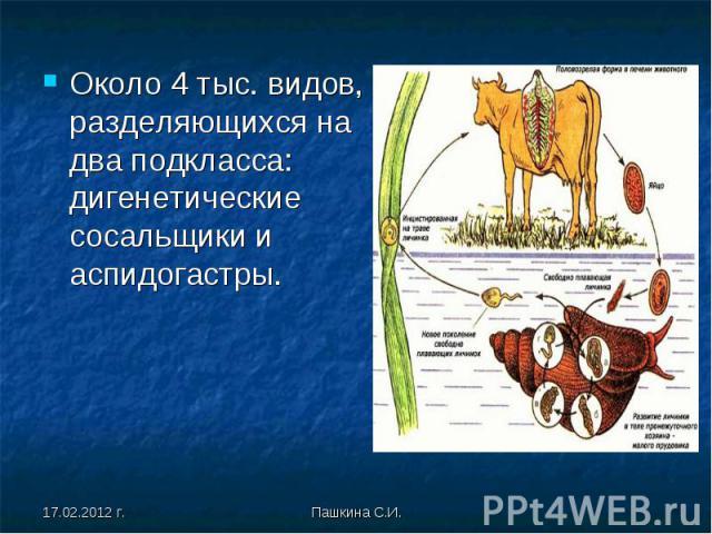 Около 4 тыс. видов, разделяющихся на два подкласса: дигенетические сосальщики и аспидогастры. Около 4 тыс. видов, разделяющихся на два подкласса: дигенетические сосальщики и аспидогастры.