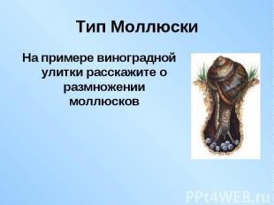 На примере виноградной улитки расскажите о размножении моллюсков На примере вино