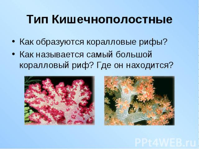 Как образуются коралловые рифы? Как образуются коралловые рифы? Как называется самый большой коралловый риф? Где он находится?