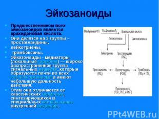 Предшественником всех эйкозаноидов является арахидоновая кислота. Предшественник