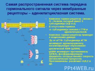 Комплекс гормон-рецептор связан с G – белком, который имеет 3 субъединицы (α,β и