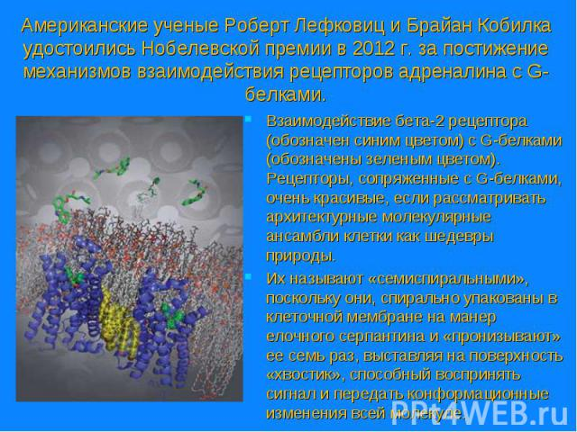 Взаимодействие бета-2 рецептора (обозначен синим цветом) c G-белками (обозначены зеленым цветом). Рецепторы, сопряженные с G-белками, очень красивые, если рассматривать архитектурные молекулярные ансамбли клетки как шедевры природы. Взаимодействие б…