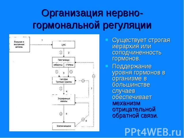 Существует строгая иерархия или соподчиненность гормонов. Существует строгая иерархия или соподчиненность гормонов. Поддержание уровня гормонов в организме в большинстве случаев обеспечивает механизм отрицательной обратной связи.