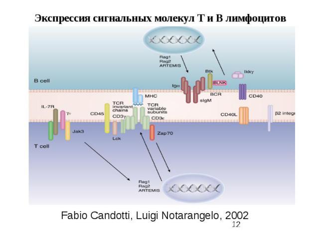 Fabio Candotti, Luigi Notarangelo, 2002