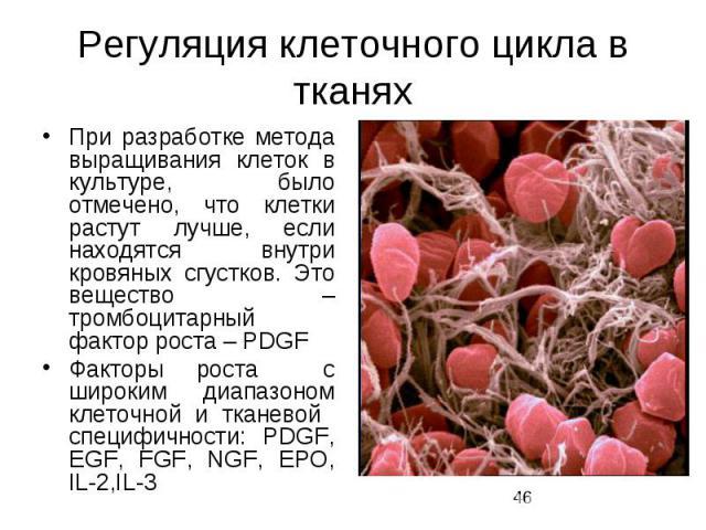 Регуляция клеточного цикла в тканях При разработке метода выращивания клеток в культуре, было отмечено, что клетки растут лучше, если находятся внутри кровяных сгустков. Это вещество – тромбоцитарный фактор роста – PDGF Факторы роста с широким диапа…