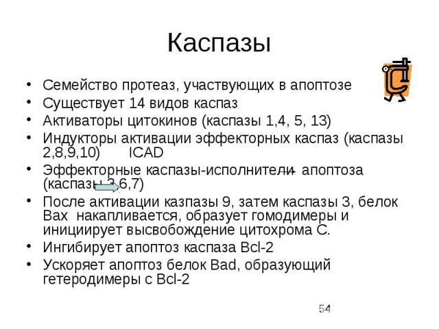 Каспазы Семейство протеаз, участвующих в апоптозе Существует 14 видов каспаз Активаторы цитокинов (каспазы 1,4, 5, 13) Индукторы активации эффекторных каспаз (каспазы 2,8,9,10) ICAD Эффекторные каспазы-исполнители апоптоза (каспазы 3,6,7) После акти…
