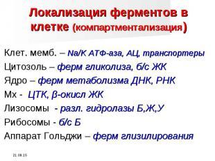 Клет. мемб. – Na/K АТФ-аза, АЦ, транспортеры Клет. мемб. – Na/K АТФ-аза, АЦ, тра