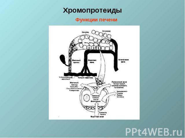 Хромопротеиды