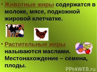 Животные жиры содержатся в молоке, мясе, подкожной жировой клетчатке. Животные ж