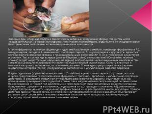 Змеиные яды- сложный комплекс биологически активных соединений: ферментов (в том