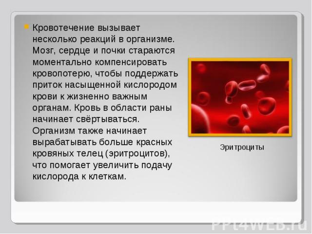 Кровотечение вызывает несколько реакций в организме. Мозг, сердце и почки стараются моментально компенсировать кровопотерю, чтобы поддержать приток насыщенной кислородом крови к жизненно важным органам. Кровь в области раны начинает свёртываться. Ор…