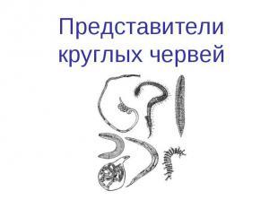 Представители круглых червей