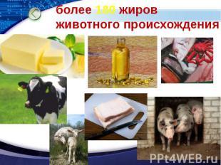 более 180 жиров животного происхождения
