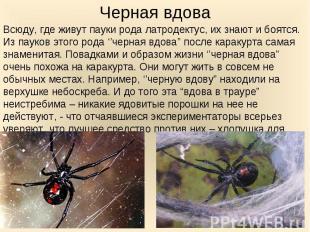 Всюду, где живут пауки рода латродектус, их знают и боятся. Из пауков этого рода