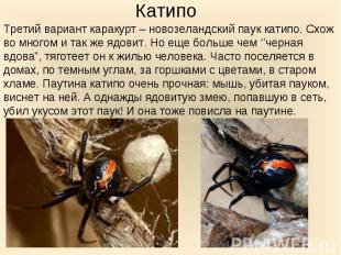 Третий вариант каракурт – новозеландский паук катипо. Схож во многом и так же яд